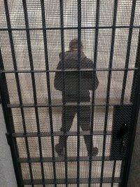 Podejrzany o kradzież za drzwiami celi.
